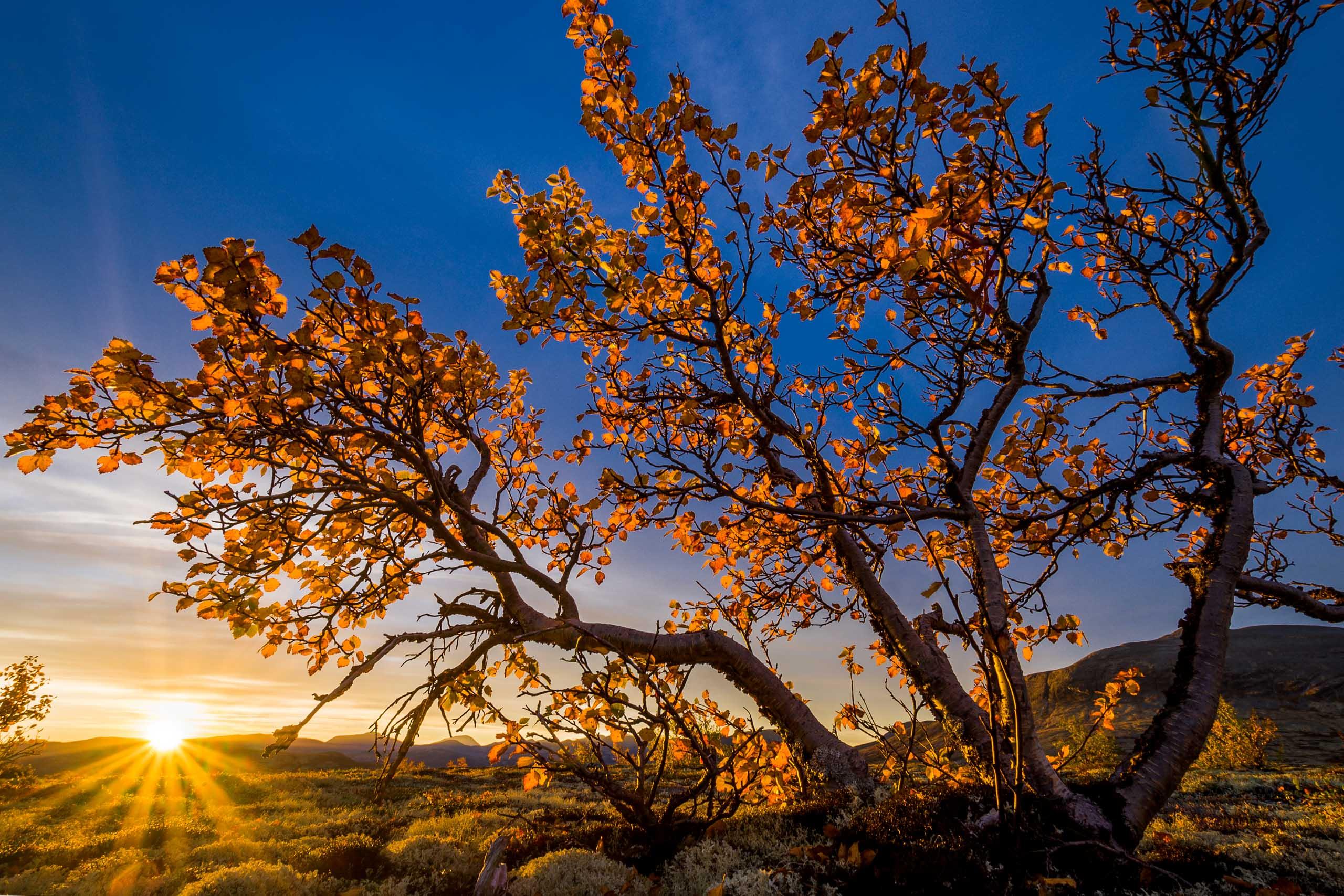 Morgenlyset i Døråldalen