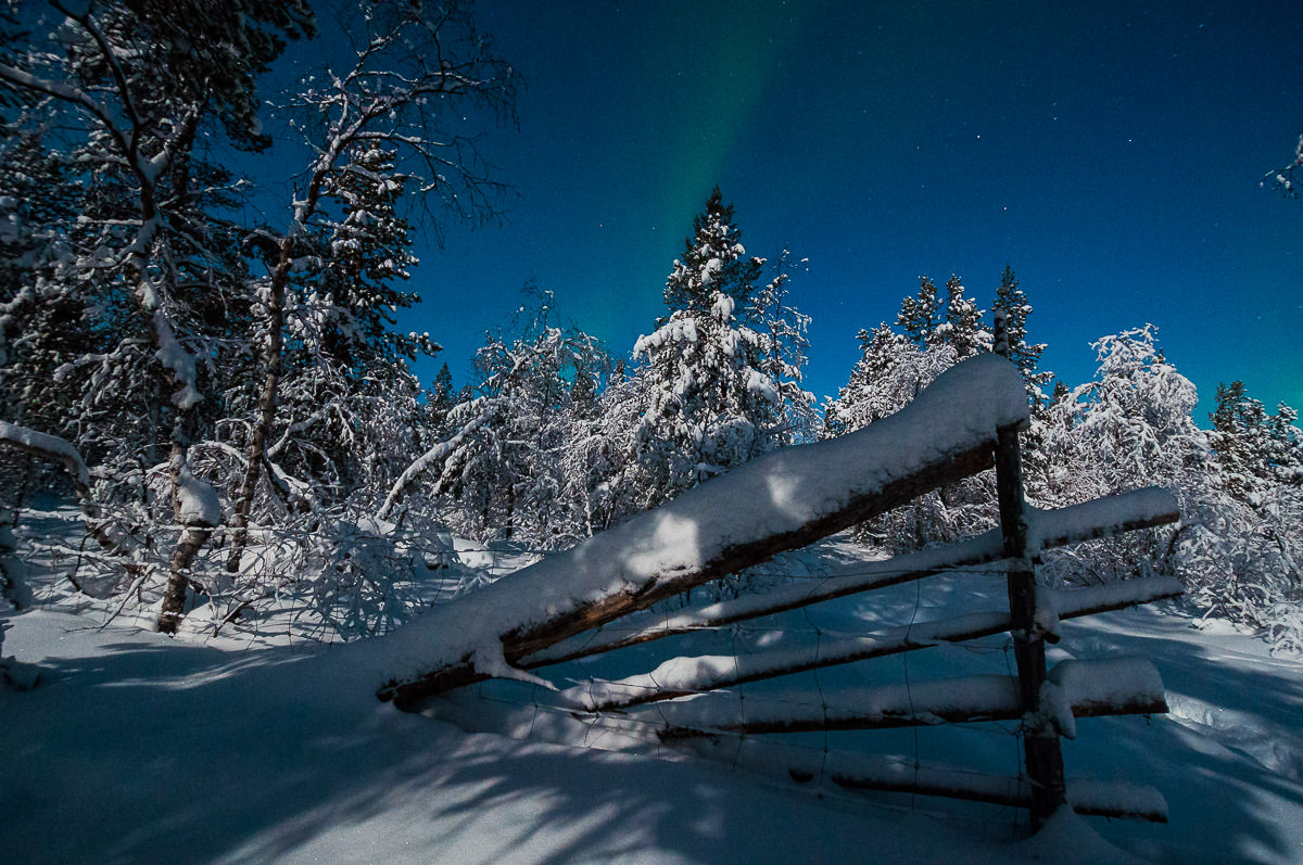 Aurora Borealis in winter wonderland