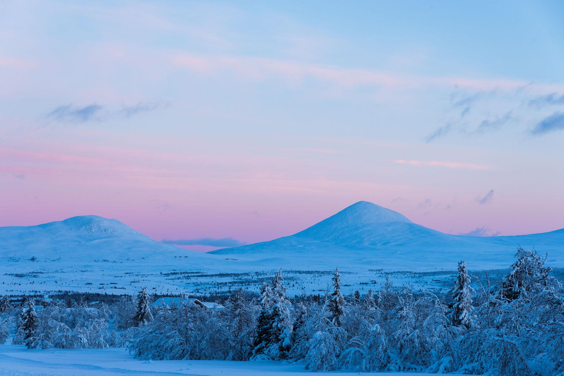 Muen, Venabygdsfjellet - Norway